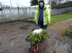 Springfield Community Garden reusing old Christmas trees